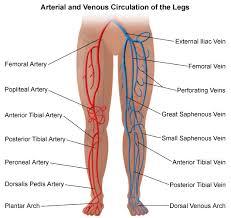 img-peripheral-vascular.jpe
